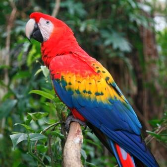 Scarlet macaw at the Zoo